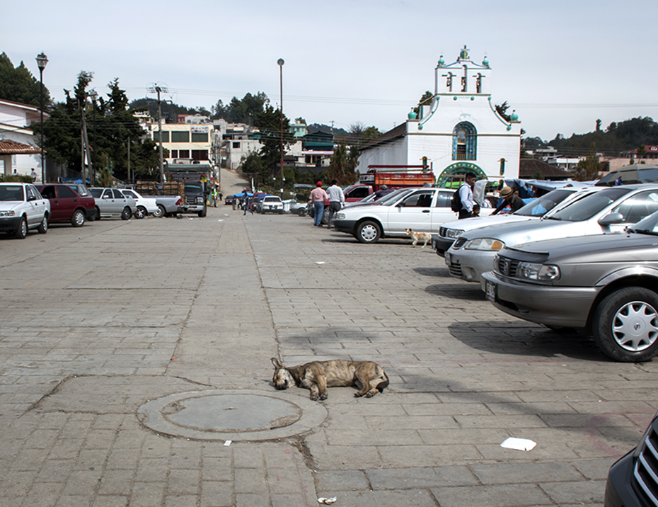 This dog decided sleeping in the middle of the road was a good idea.