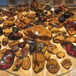 Our Mexican Amber Fixation